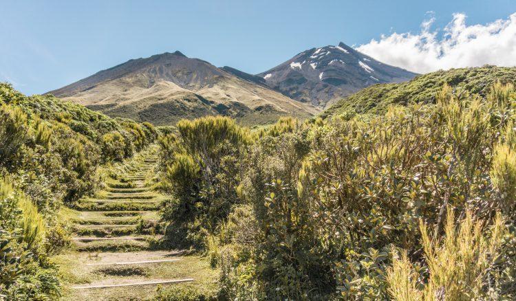 Der Weg zu Fanthams Peak - Mount Taranaki, Neuseeland | © Boardshortslife