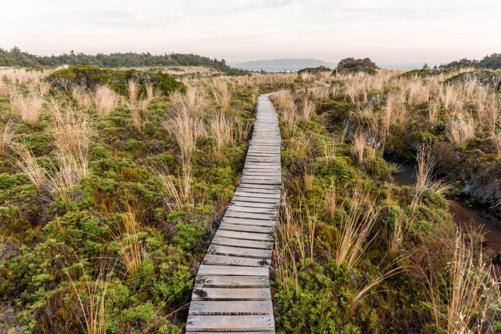 Wanderweg zum Whakapapaiti Hut