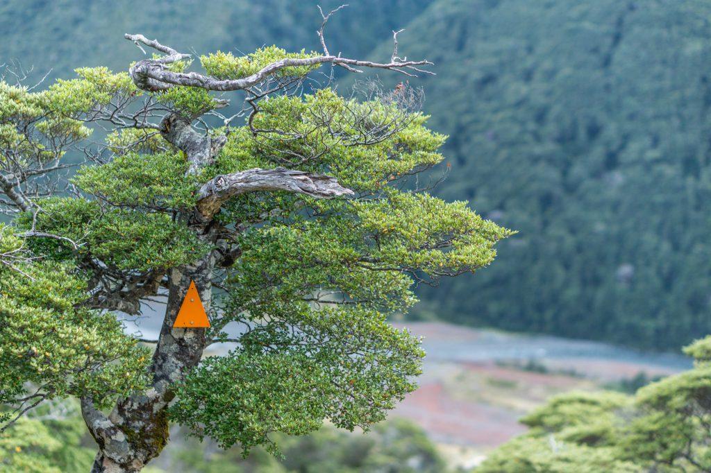 Orangene Markierungen beim Start der Waldwanderung